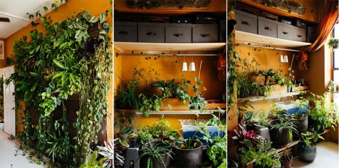 Женщина посадила у себя дома 500 растений: фото самых зеленых апартаментов (1)