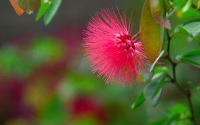 Сигнальные молекулы бедствия: в растениях обнаружили аналог нервной системы