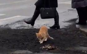 """У Миколаєві кіт """"оцінив"""" якість свіжого асфальту – опубліковано епічне відео"""