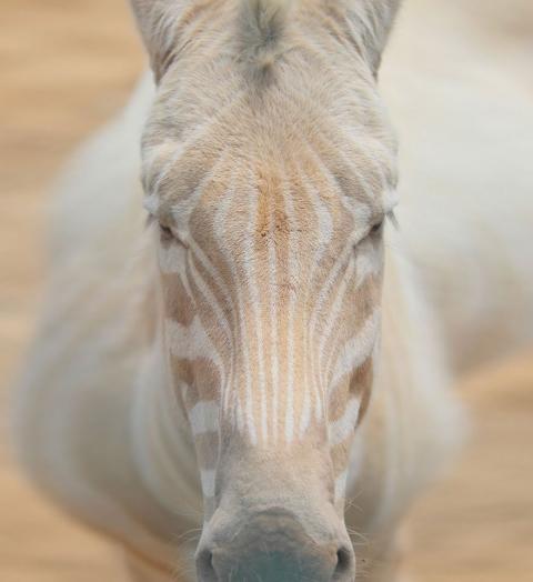 Животные-альбиносы, которым не нужен цвет, чтобы выглядеть потрясающе (16 фото) (2)