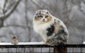 Приближается еще одно похолодание: названа дата последнего снега в Украине