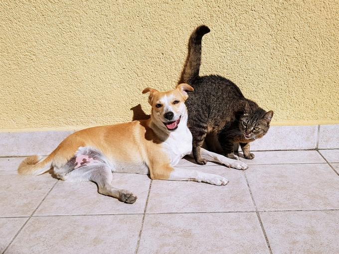 В китайском Шэньчжэне запретили есть кошек и собак - что важно об этом знать (1)