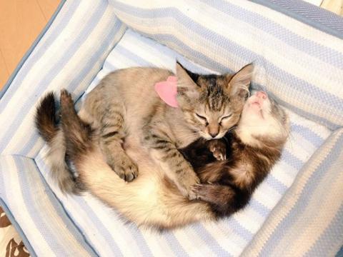 Представляємо кошеня, яке вважає себе тхором (12 фото) (6)