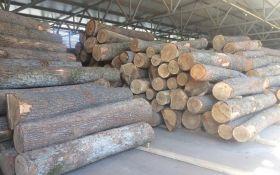 Продаж українського лісу в Європу: економіст зробив гучну заяву