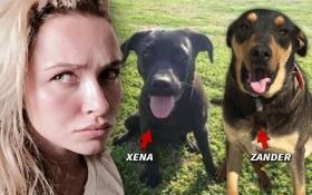 На наречену Кличка подали до суду через собак