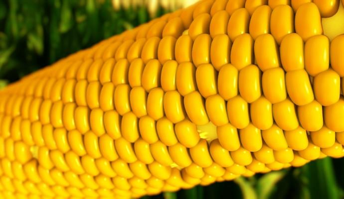 Украина уже использовала годовую квоту на экспорт кукурузы в ЕС