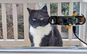 Голландский программист написал распознаватель морды кота