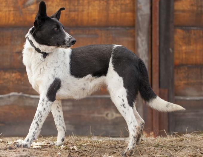 Найди друга: необыкновенные собаки ждут любящих хозяев (13)
