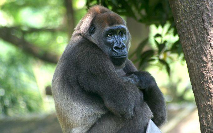 На грани вымирания: названы животные, которые могут исчезнуть с лица Земли