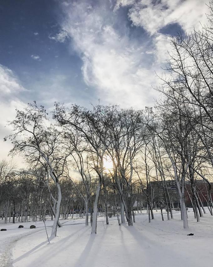 Киев засыпало снегом: в сети опубликованы яркие фото и видео (1)
