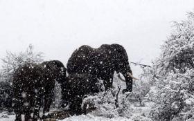 В Африке выпал снег - впечатляющие фото и видео