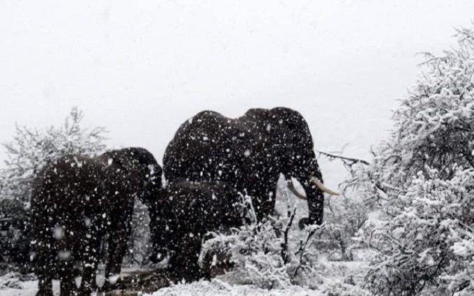 В Африці випав сніг - вражаючі фото і відео