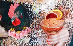 Подгузники и платья для куриц: в США набирает обороты новое элитное хобби