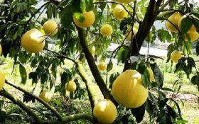 Який фрукт потрібно включити у раціон взимку - порада дієтолога