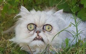 """Мережу злякали фото """"найстрашнішого"""" кота на планеті"""