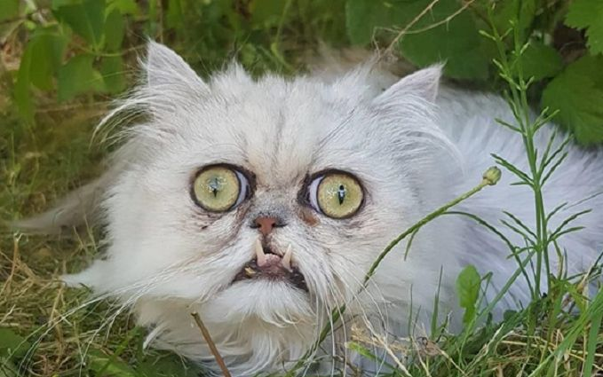 """Сеть испугали фото """"самого страшного"""" кота на планете"""