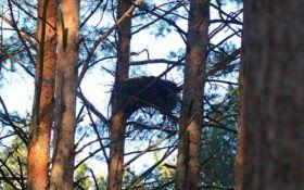 В Чернобыле нашли гнезда редких птиц: появились фото
