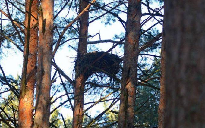 У Чорнобилі знайшли гнізда рідкісних птахів: з'явилися фото