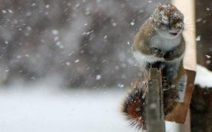 Снегопады, морозы и метели: в Украине объявили штормовое предупреждение