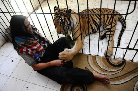 Неймовірна історія дружби тигра і людини (13 фото) (6)