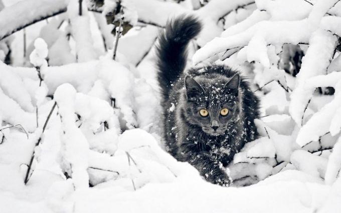 На Маланки й Василя прийдуть міцніші морози, - синоптик про погоду на вихідних в Україні