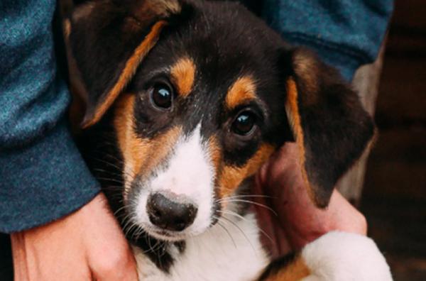 Приюти: 5 приютов, где можно взять животное домой (1)