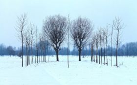 Прогноз погоды в Украине на понедельник - 21 января