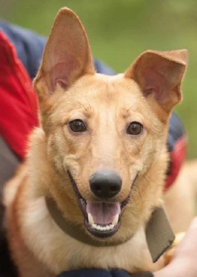 Найди друга: очаровательные собачки мечтают про уютный дом (4)