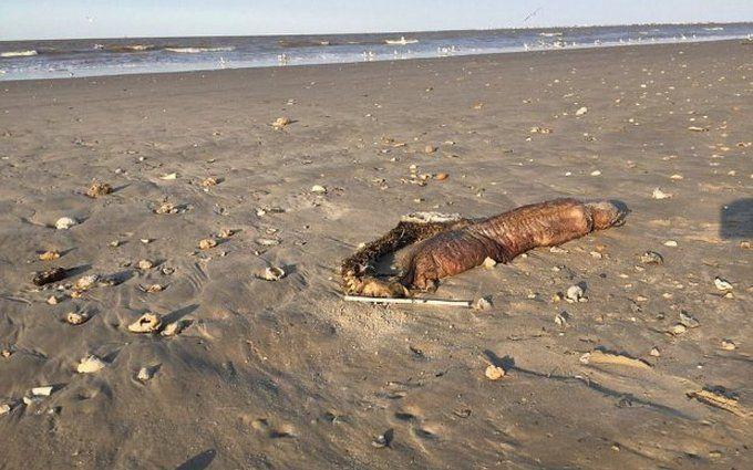 Ураган в США выбросил на побережье неизвестное существо: опубликованы фото