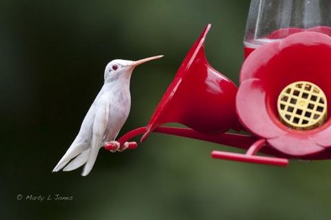 Животные-альбиносы, которым не нужен цвет, чтобы выглядеть потрясающе (16 фото) (15)