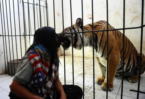Неймовірна історія дружби тигра і людини (13 фото) (7)