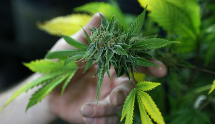 Последствия курения марихуаны проявляются в среднем возрасте