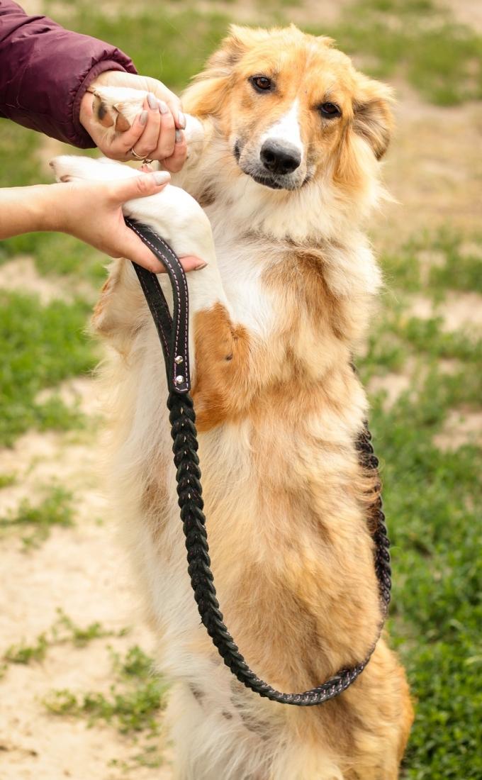 Найди друга: 8 замечательных собачек мечтают найти дом (5)