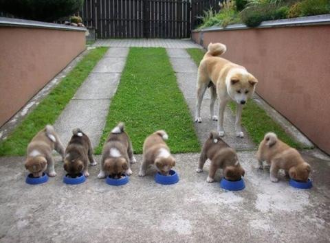 Собаки-мами, які безмірно пишаються своїм потомством (20 фото) (13)