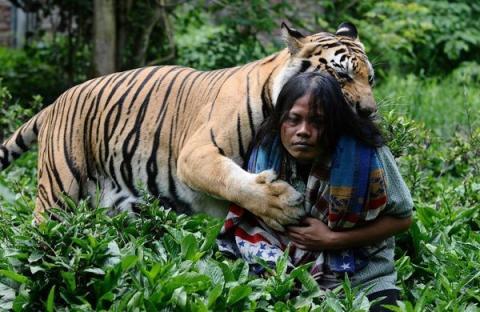 Неймовірна історія дружби тигра і людини (13 фото) (4)