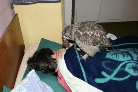 Парень подобрал раненую сову, и вот как она его отблагодарила (5 фото) (3)