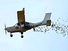 Бизнесмен сбросил с самолета 11 тысяч долларов