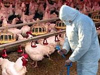 """В США зафиксирована вспышка """"птичьего гриппа"""""""