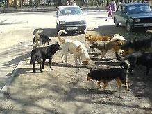 В Керчи стая обезумевших собак покусала 6-летнюю девочку