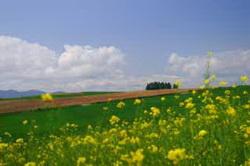 В Украину пришла летняя погода