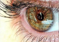 Офтальмологи обнаружили механизм природного восстановления глаз