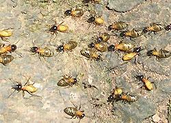 Термиты съели все сбережения индийского трейдера