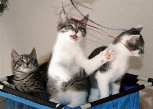 В Японии кошек и собак назначают начальниками железной дороги