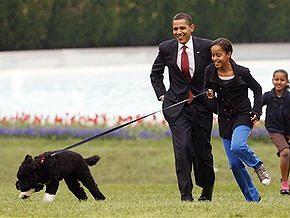 Обама представил новую собаку Белого дома