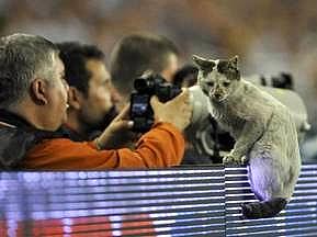 """Фанаты """"Шахтера"""" отправляются в Стамбул на поиски фартовой кошки"""
