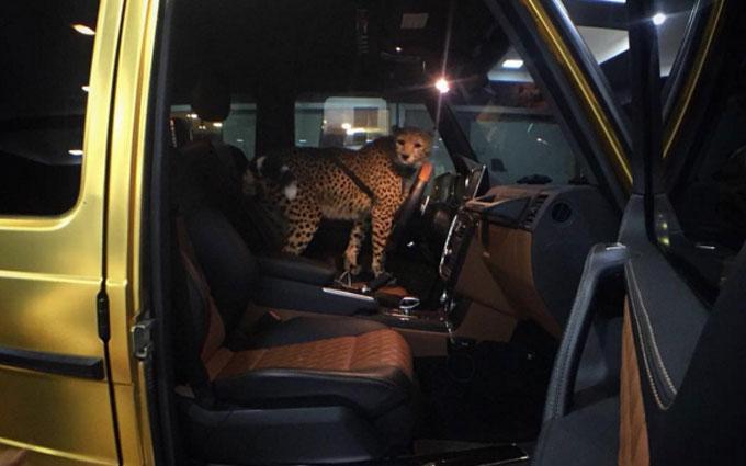 Арабский миллиардер шокировал британцев золотым автопарком: опубликованы фото и видео (1)