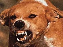 На Волыни собака загрызла шестилетнего мальчика