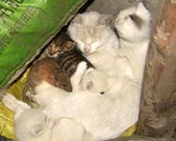 """Китайская кошка """"удочерила"""" крысу"""