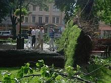 Ураган обошелся Львову в 25 миллионов