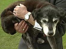 Собака из Великобритании претендует на звание самой старой в мире